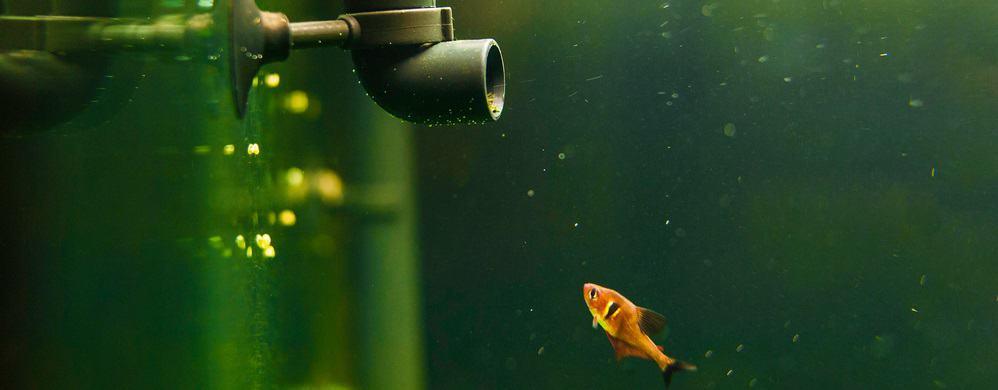 best fish tank filters