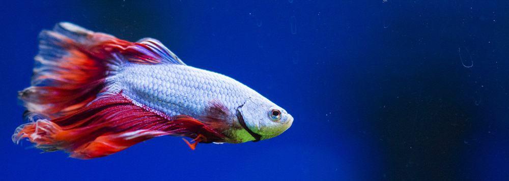 best low flow aquarium filter