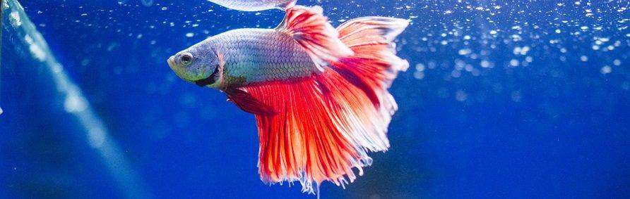best low flow aquarium filters betta