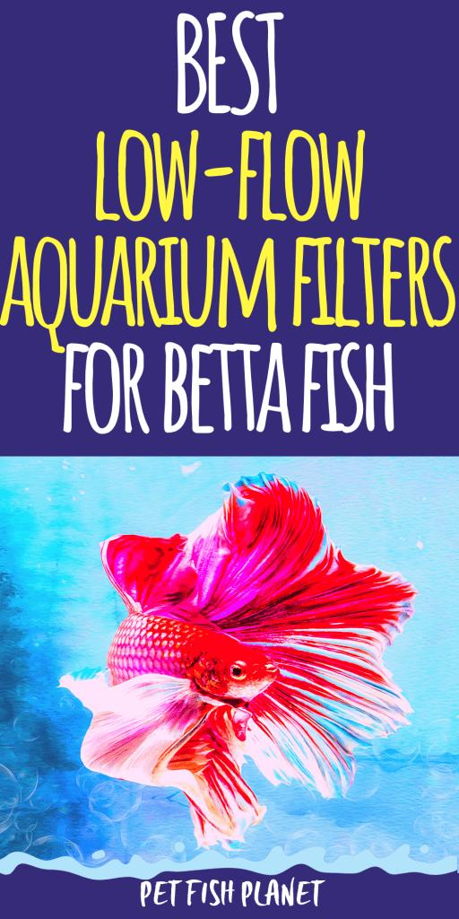 Best Betta Fish Tank Filters for 2021 (Betta Fish Tank Ideas & Aquarium Setup)