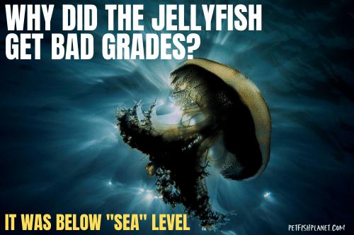 funny jellyfish puns