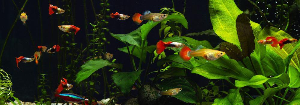 small tank aquarium fish
