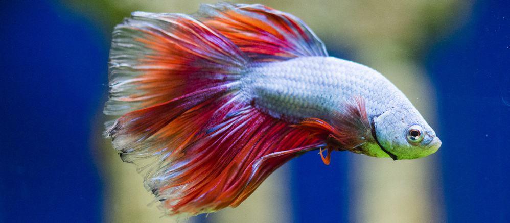 the best betta fish tank reviews